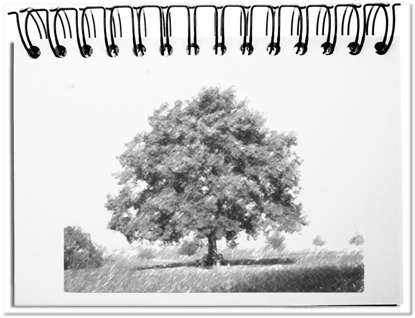 Der Baum - die ideale Metapher für Lebenszyklen
