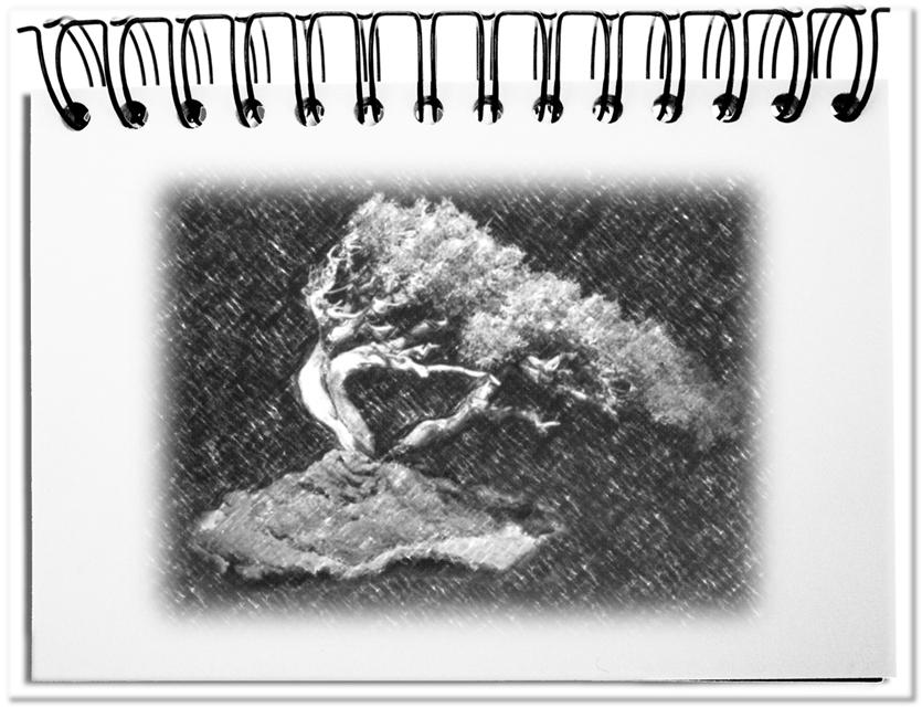 Bonsai - die ideale Metapher für im Keim ersticktes Engagement
